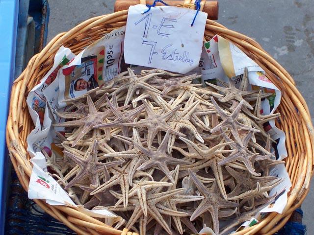 Peniscola Starfish