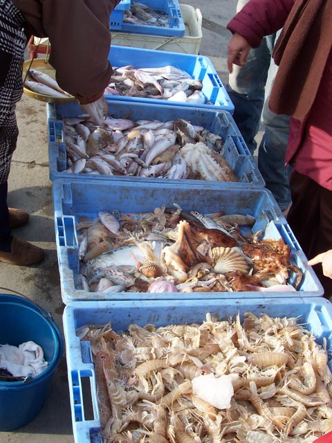 Tubs of fish and crustaceans waiting to be sold at the peniscola fish market