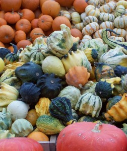 Pumpkins at Thanksgiving Market - Montreal