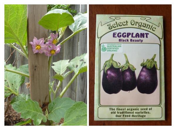 Eggplant pair