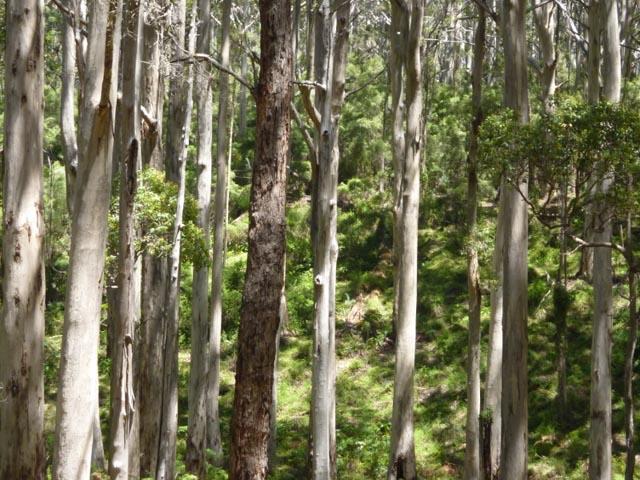 WA Boranup Forest