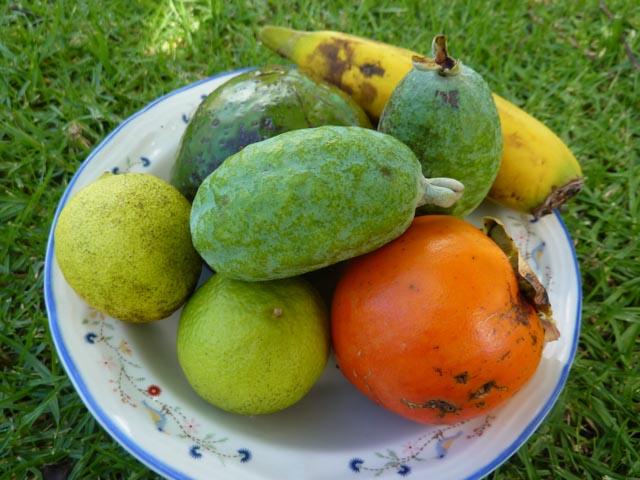 Island fruits