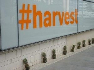 Sign for the Harvest Exhibition at the Qld Gallery of Modern Art