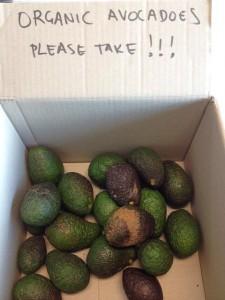 Organic Avocadoes