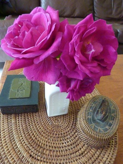 IMK Roses 1