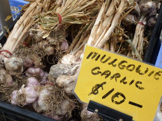 Mulgowie Garlic 1