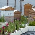 bzzz… Bee One Third's Urban Bee Hives – Brisbane… bzzz…