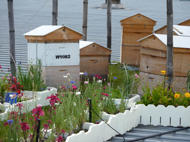 bee hives on top of a roof in urban Brisbane