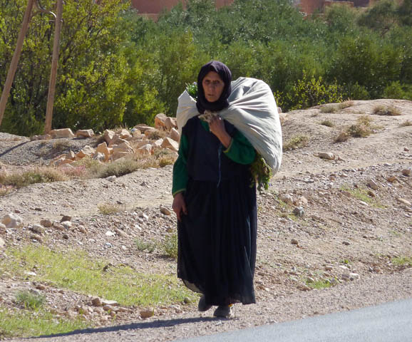 A local women in traditional heavy skirt and blouse with headscarf carries a load of wood on her back - Todra Gorge, Morocco