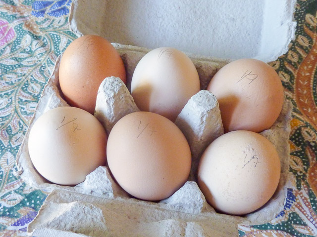 a carton of 6 eggs