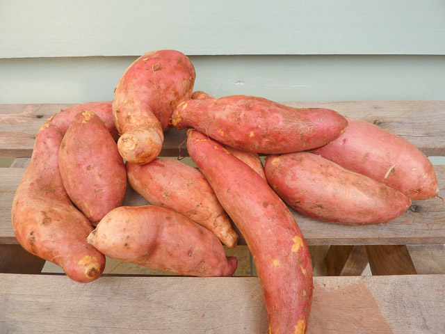 A pile of sweet potatoes from Wide Bay-Burnett