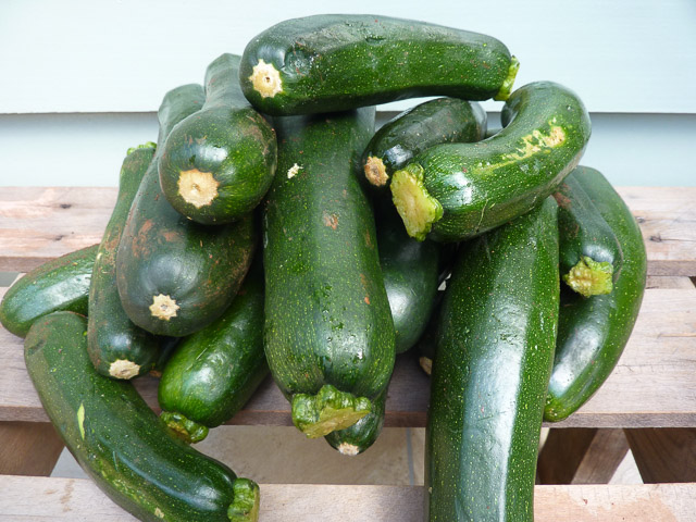 A pile of zucchini from Wide Bay-Burnett