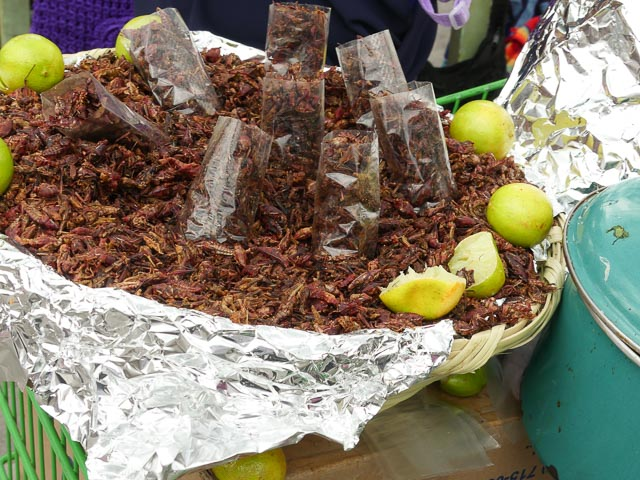 trap of chapulines or mexican grasshoppers being sold in Mexico city