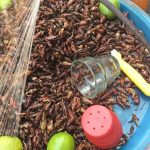 closeup of mexican grasshopper or chapulines being sold with salt and lime