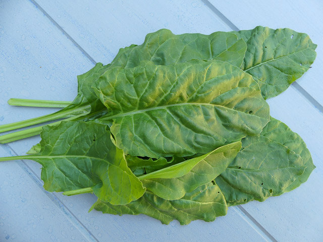 a bunch of picked fresh spinach leaves