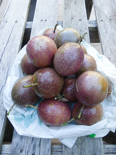 numerous purple passionfruit piled on a table