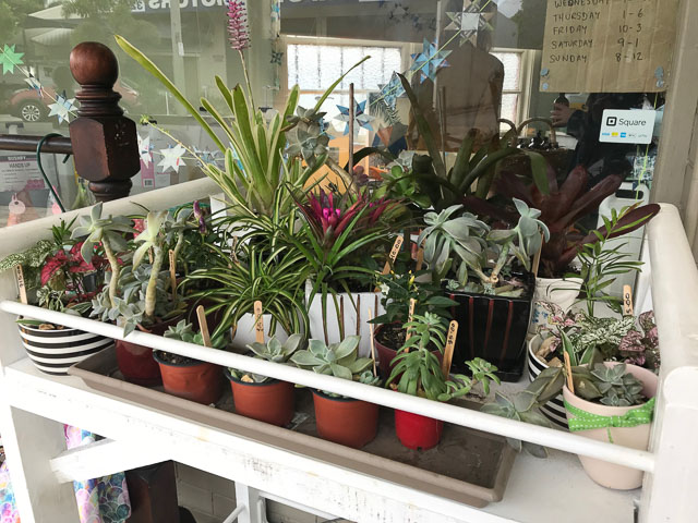 small and medium potted plants sitting on a shelf outside vessel nundah