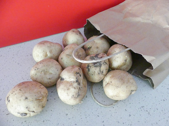 small new potatoes with dirt on them spill out of a paper bag onto a bench