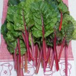 a pile of freshly cut silverbeet or swiss chard leaves with red stalks