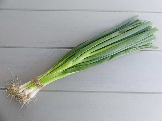 bunch of spring onions wrapped at end with twine, lying on kitchen bench